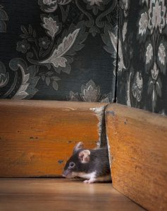 MBM gestion parasitaire Rongeurs souris