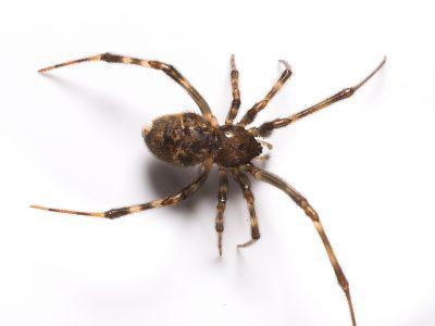 araignée-mbm-infestation-extermination